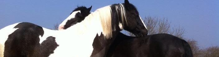 Great Horse Products